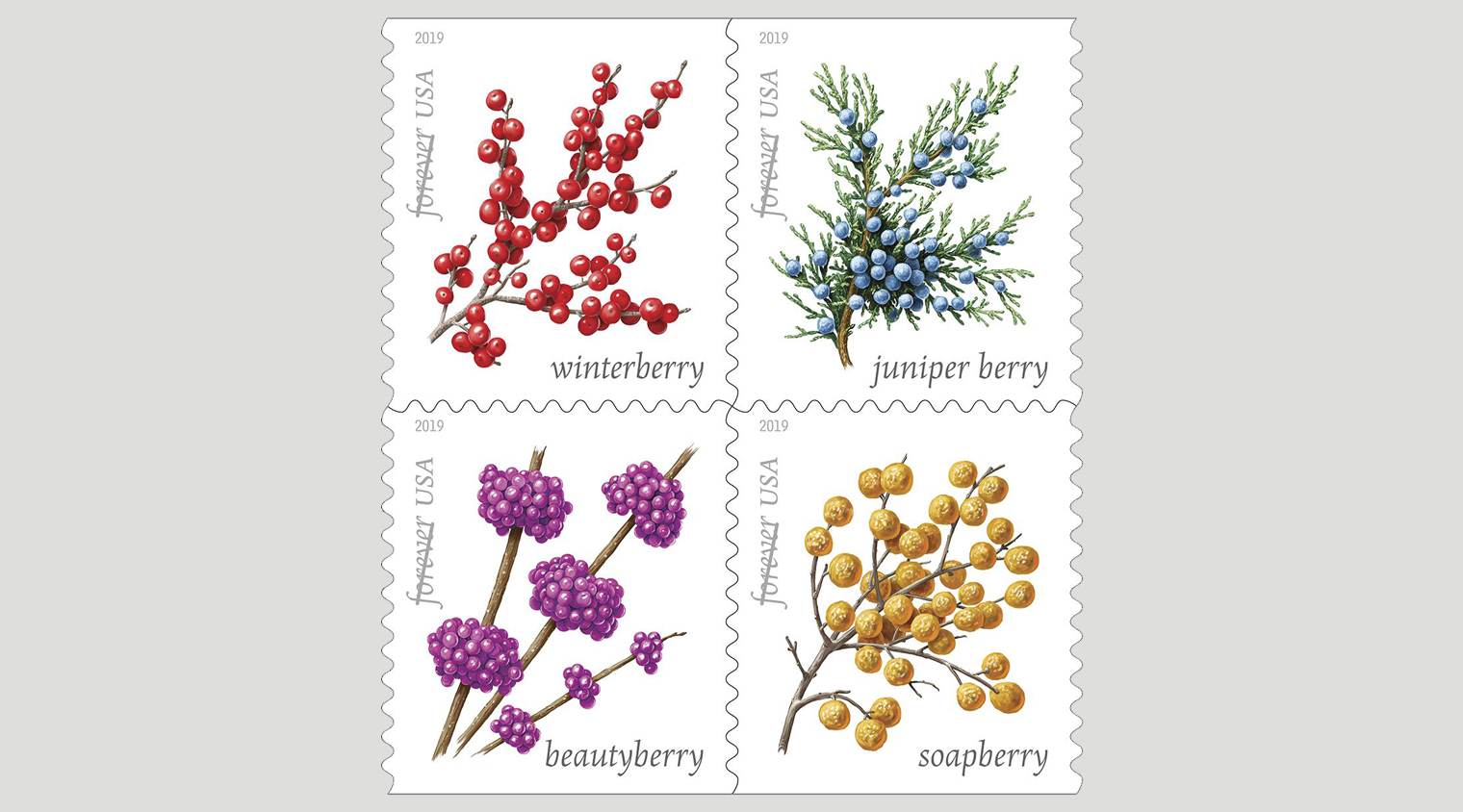 Winterberry Stamp
